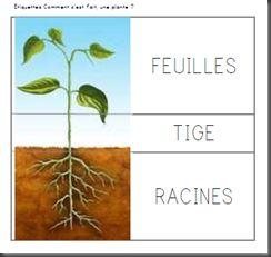 image plante