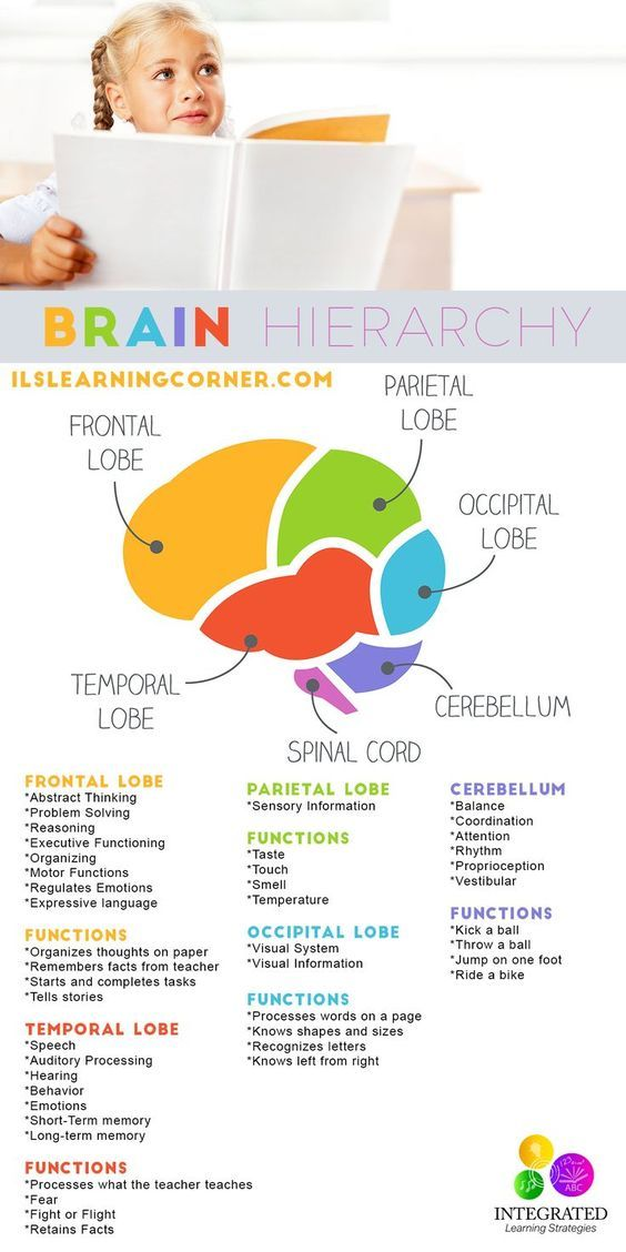 Brain Hierarchy: When Your Child's Lower Brain Levels Are Weak, they Can't Learn   ilslearningcorner.com