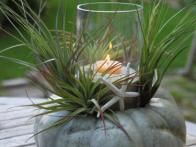 This craft comes together quickly and will make a striking centerpiece indoors or out. Get how-to steps at HGTV Gardens.