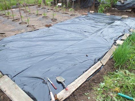 Выращивание перца и баклажан на пленке