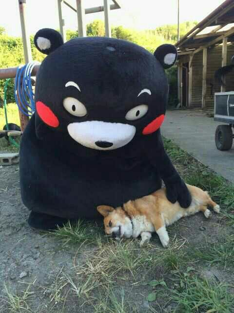 Kumamon and a dog.@くまモンとコーギーちゃんだ~!