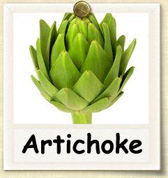 How to Grow Artichoke | Guide to Growing Artichoke