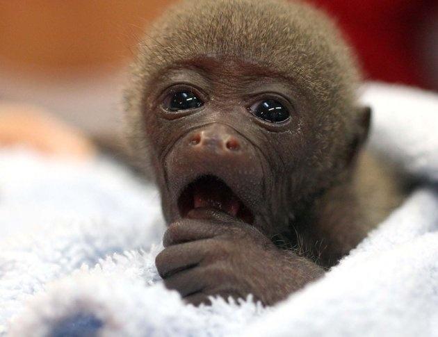 Veterinaria adopta bebé m…