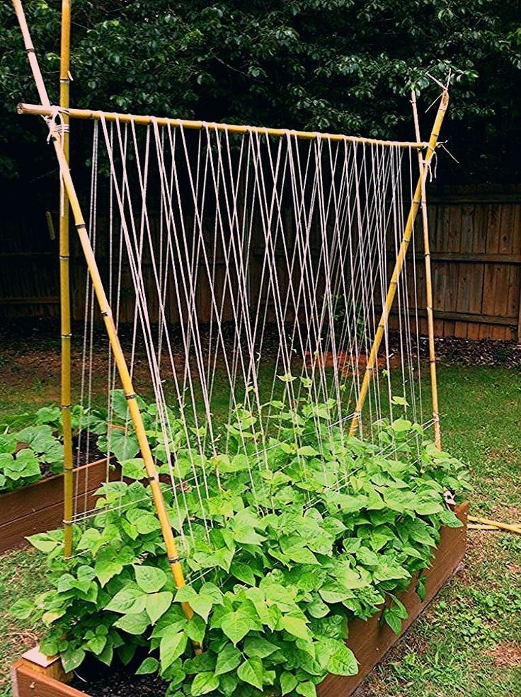 15 easy attractive diy cucumber trellis ideas on how to