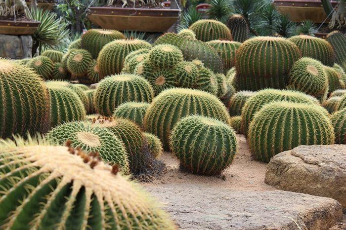 1001 Idees Fantastiques De Decor Avec Plantes Grasses D