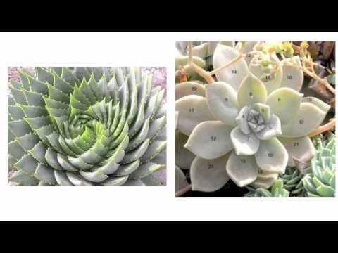 Spirit Science The Math of God Hyper Dimensional Physics Phi Ratio fibonacci code
