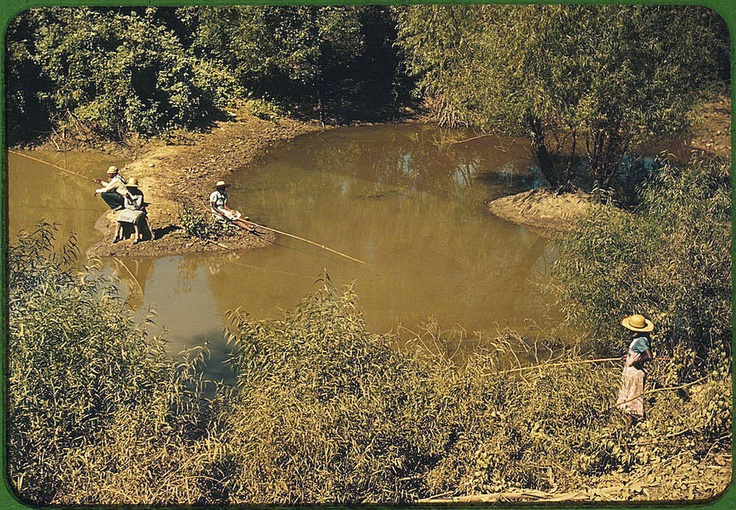 Fishing in a creek near Belzoni, Mississippi, October 1939.: Photos, World War Ii, Libraries Of Congress, American Fish, Cotton Plantation, Colors Photography, Africans American, 1939 1943, October 1939