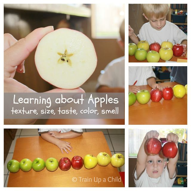 Early math concepts with apples, hands on learning for preschoolers.