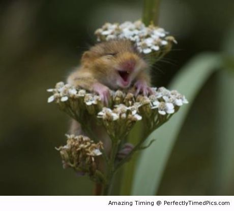Ridiculously happy – The hamster has found flowers of great scent. The perfect place to enjoy nature.