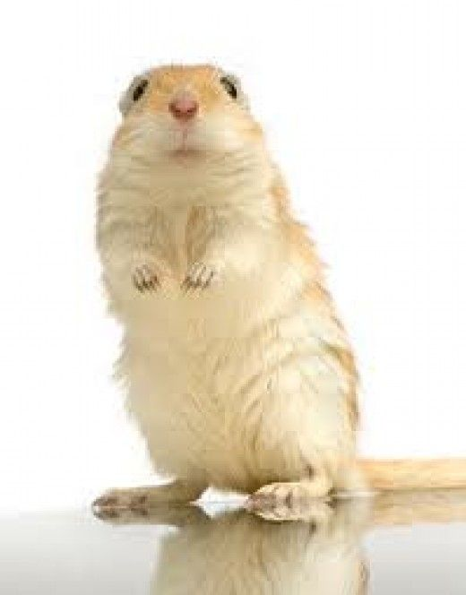 "5 REASONS WHY GERBILS MAKE GREAT PETS My daughter just got a pair of gerbils; Marshmallow and Nutella are there names. At first, I was thinking this whole ""gerbil thing"" would turn into another disaster, like those newts that came down with a bad..."