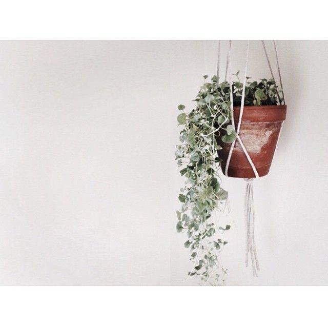 Simpel pottepoesi #Botanic#bolig#hængeplanter#indretning#diy#aestheticsliving#spisestue#planter