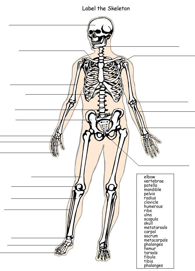 Skeleton homework ks1 – Blank Skeleton Worksheet