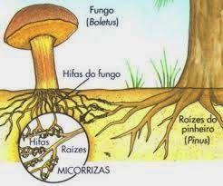 Cultivo Loco: Microrrizas, los hongos (y bacterias) buenos!