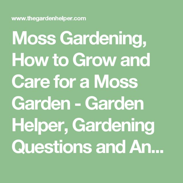 Moss Gardening, How to Grow and Care for a Moss Garden - Garden Helper, Gardening Questions and Answers