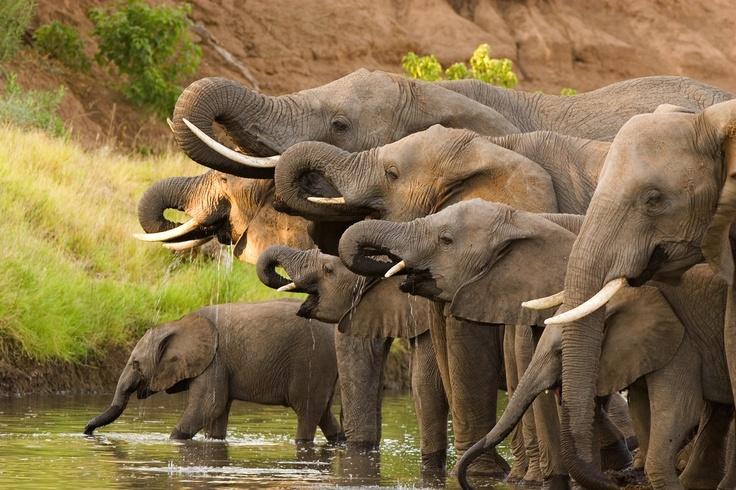 Happy Hour in the Okavango Delta, #Botswana.