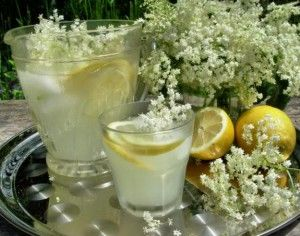 Old Fashioned English Elderflower CordialPrint recipe     Serves	1 litre  Prep time	96 hours  Dietary	Vegetarian  Meal type	Beverage, Condiment, Dessert, Lunch, Salad, Side Dish  Misc	Child Friendly, Pre-preparable, Serve Cold  Region	British  By author	Karen S Burns-Booth