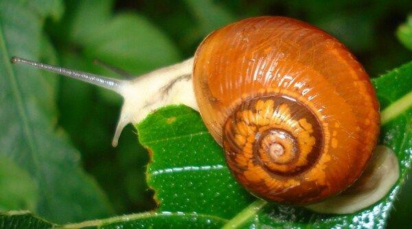 Zo creëer je een slakkenvrije tuin! Verse groenten of kruiden in je moestuin, of prachtige bloemen en planten in je tuin: insec...