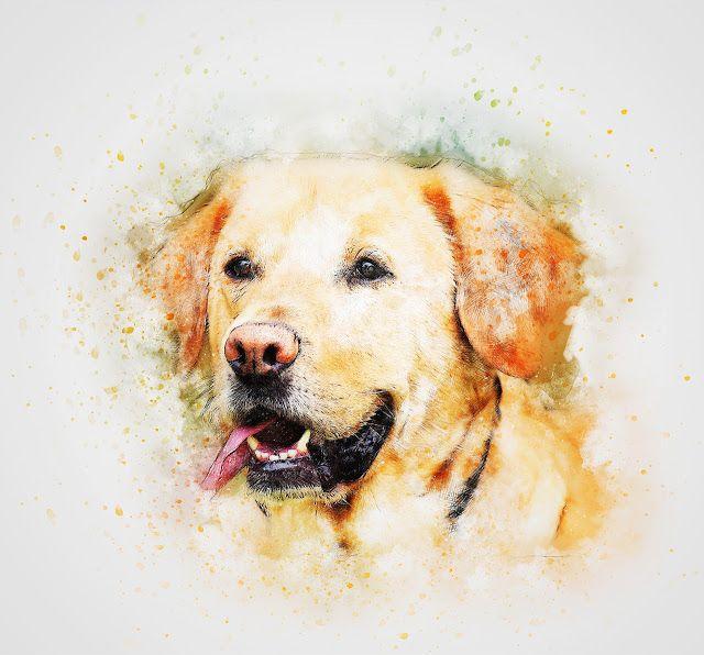 صور فنية مميزة لوحات فنية مرسومة يدويا In 2020 Labrador Retriever Labrador Art Labrador