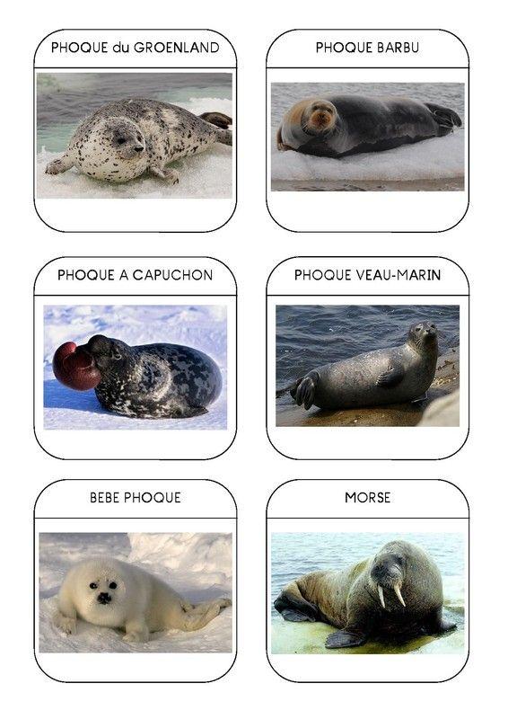 Imagier des animaux polaires