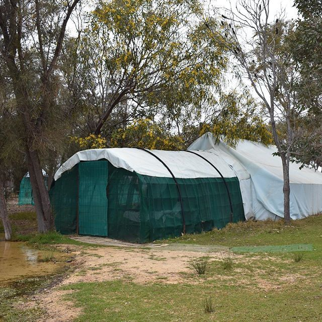 Boshack Outback is an eco-friendly farm. The tents are all made from recycled material.