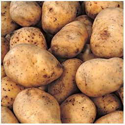 Kennebec Potato Seeds
