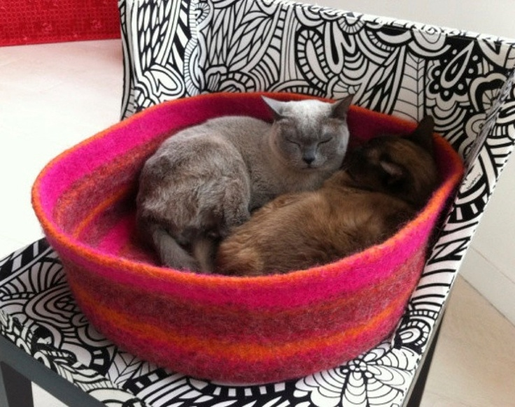 {cats cozied up together} sigh. I want to cuddle with a cat right now.