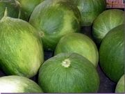 Scheda prodotto: il melone Carosello, detto anche Barattiere