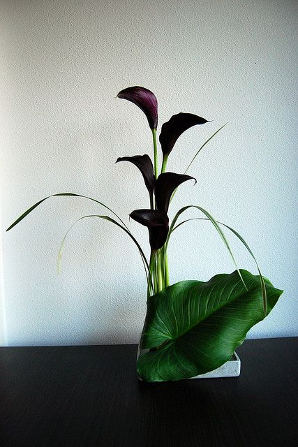 Ikebana 'The big leaf' by Otomodachi, via Flickr
