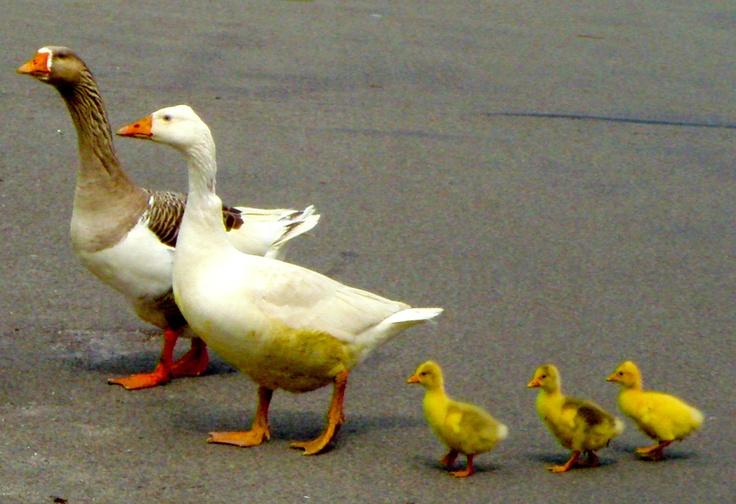het gezin / the family
