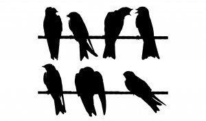 Madarak a dróton nálunk – Birds on wire   MakerMom