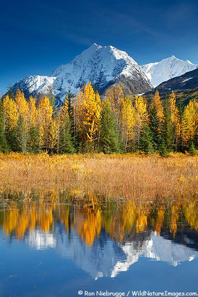 Autumn in #Alaska, #Chugach National Forest