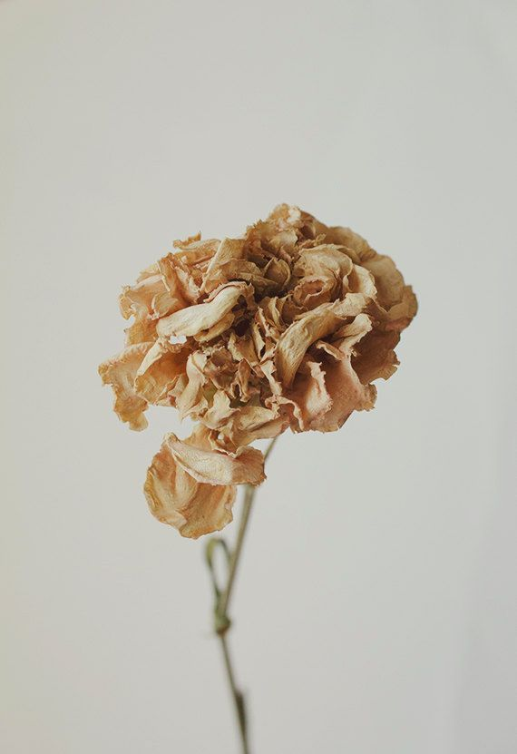 Floral Still Life Macro Photography Dried by bellesandghosts