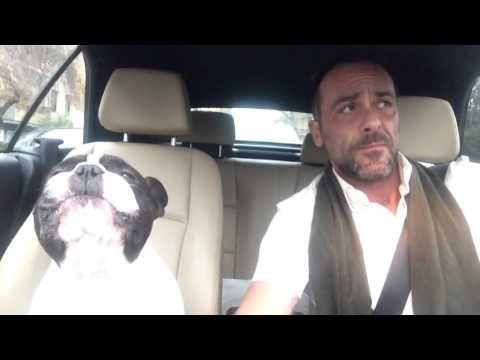 Singing French Bulldog & His Human Perform Duet of the Rihanna Ballad 'Diamonds' in the Car