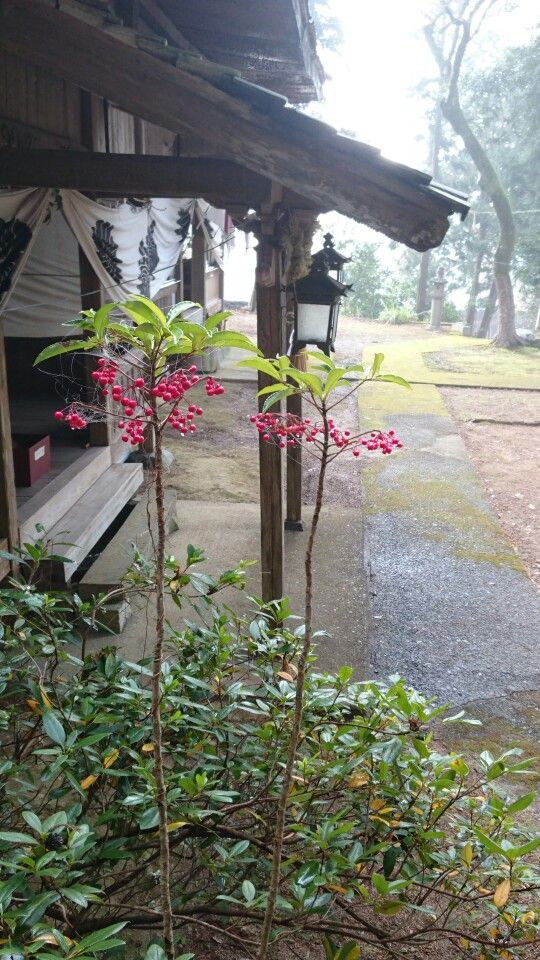 田舎の神社に初詣