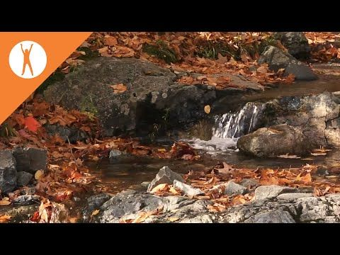 Music for body and spirit - YouTube