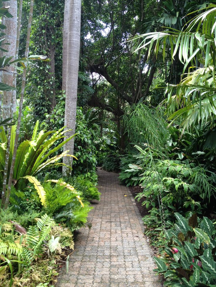 Walking the paths of the stunning Cairns Botanical Gardens.