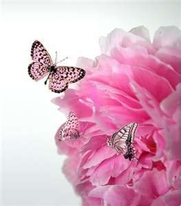 Pink on Pink #Pinterest Pink: Pink Butterfly, Beautiful Butterflies, Pink Flowers, Colors Pink, Tickle Pink, Pink Pink, Pink Butterflies, Butterflies Pictures, Flowers And Butterflies