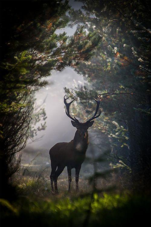 Buck.......        Fall Adventure