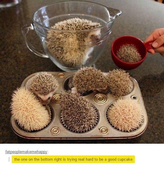 """""""Look at all the tiny Jawns omg (ノ*゚ー゚)ノ""""<---this is amazing thank you commenter"""