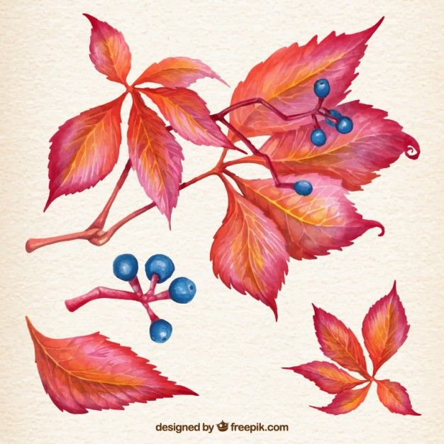 Free vector Natural autumn leaves #12632