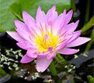 Brisbane Botanic Gardens Mount Coot-tha: What's on at the gardens