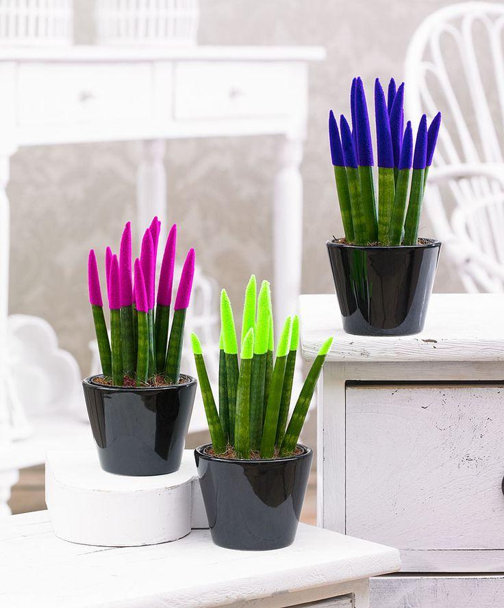 Collection De 3 Plantes Crayon Velvet Touchz 174 En 3