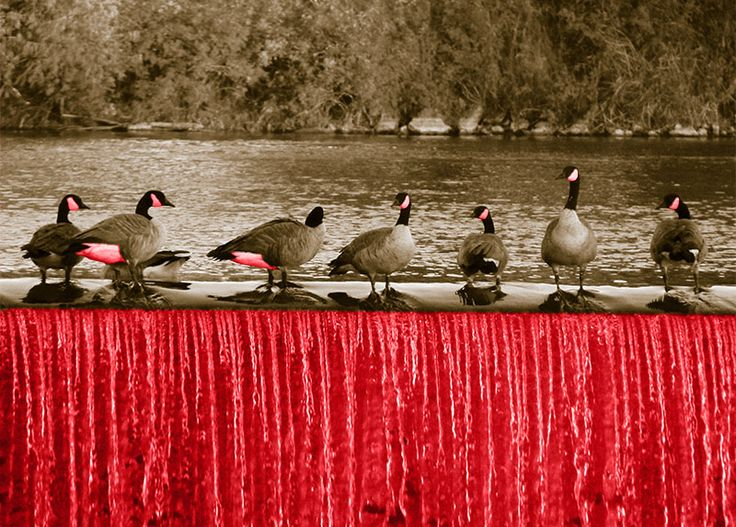 WallArt - Geese - Presentorium