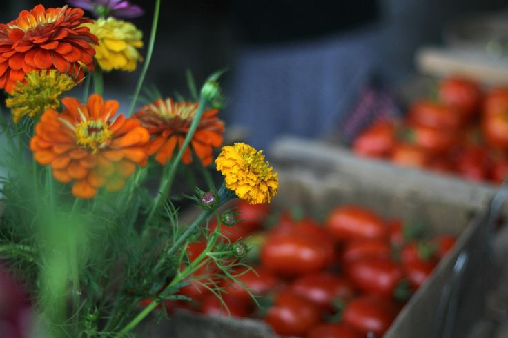 Fresh flowers and fresh, organic tomatoes at Hill