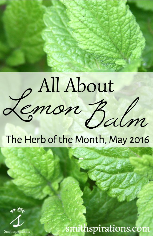"""Lemon balm is such a bright cheerful herb that promotes mental wellness, relaxation, and improved digestion. """