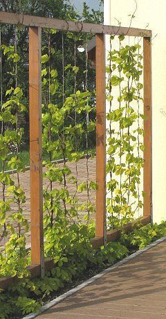 Trellis frame with U-shaped wire ropes