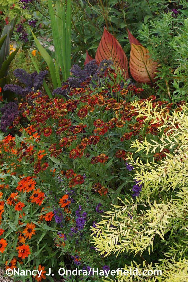 68 best Garden: Red/Orange/Yellow Foliage images on Pinterest ...