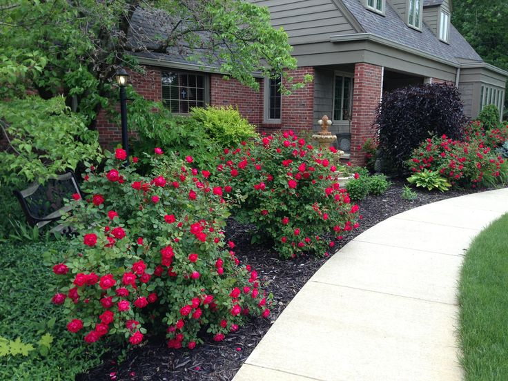 Double Knock Out® roses-  I use them as a small hedge around my patio.  Easy care- great color all summer.