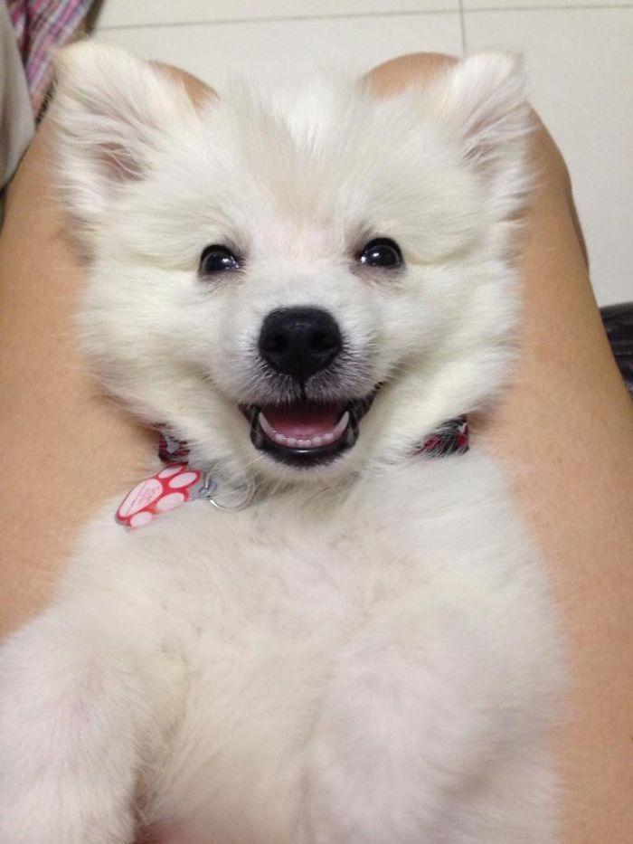 Os sorrisos caninos mais fofos                                                                                                                                                                                 Mais