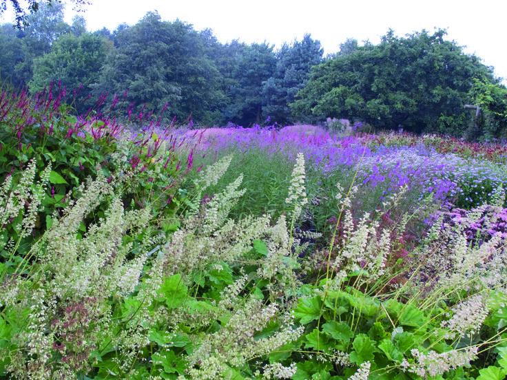 409 best gardens of piet oudolf images on pinterest for Piet oudolf favorite plants
